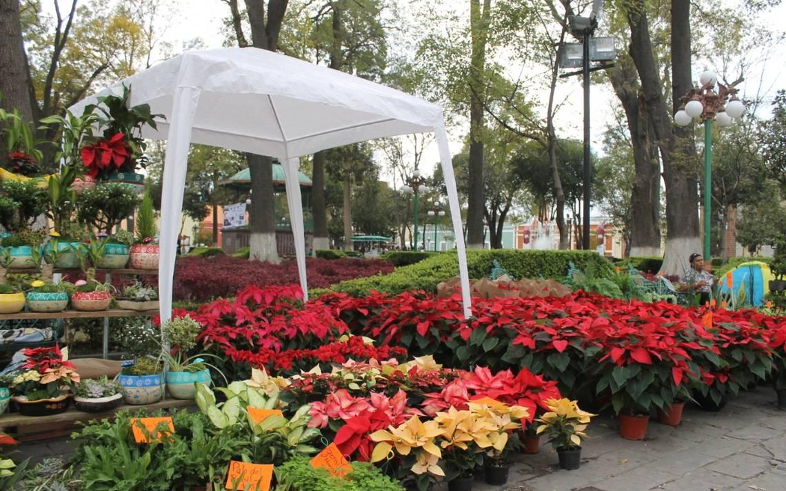 Llegan productores de plantas de Atlixco a la capital - El Sol de Tlaxcala