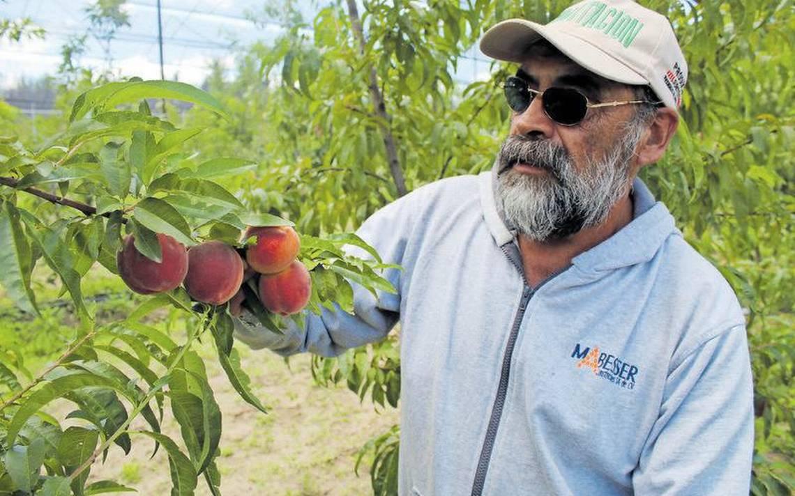 Capacita Inifap a fruticultores - El Sol de Tlaxcala