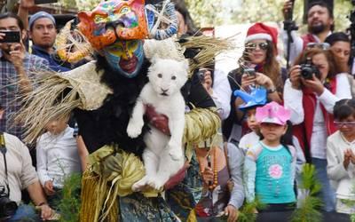 Fiesta salvaje en el Zoológico del Altiplano, por la presentación de ...